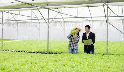 Men inspecting vegetable farm quality.