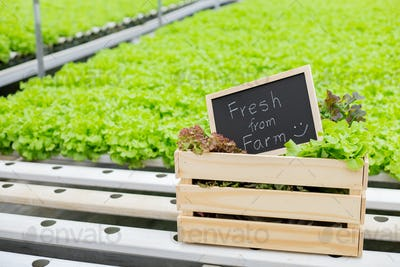 Organic vegetables fresh from farm.