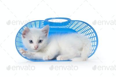 Cute white kitten with blue eyes in a blue plastic basket