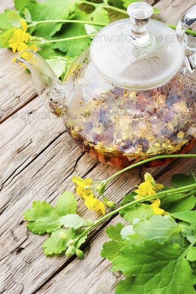 Medicinal tincture of celandine,herbal medicine.