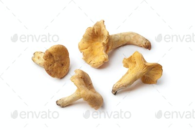 Fresh yellow chanterelles