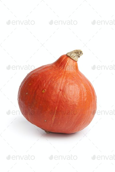 Whole single orange Hokkaido pumpkin