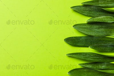Beautiful snowdrop leaves on color background, space for text
