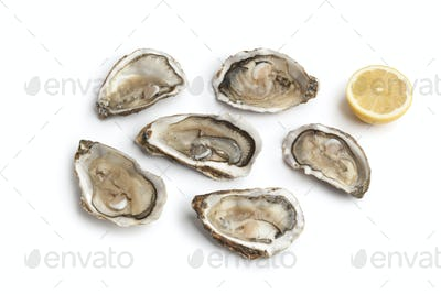 Fresh raw oysters in an open shell