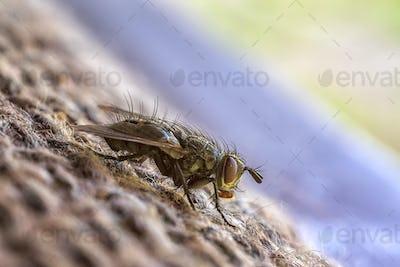 sitting fly