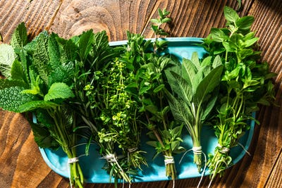 Fresh Aromatic Herbs. Culinary Home Grown Plants. Seasoning and Healthy Eating