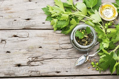 Healing tea with currant leaves