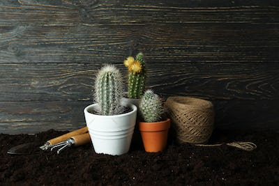 Concept of gardening against rustic wooden background