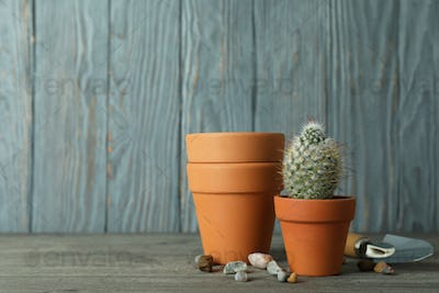 Concept of gardening against gray wooden background
