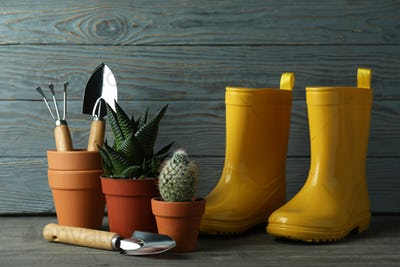 Tools for gardening against gray wooden background