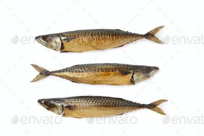 Whole steamed mackerel fishes