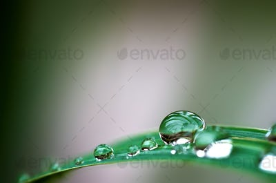 water drops on the green grass blade