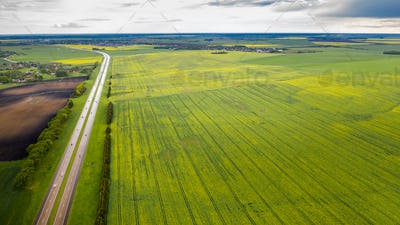 Top view of the sown green in Belarus.Agriculture in Belarus.Texture