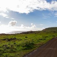 Horses on Coastal Pasture - Easter Island Landscape. Roud to Anakena