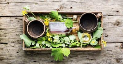 Medicinal herb celandine