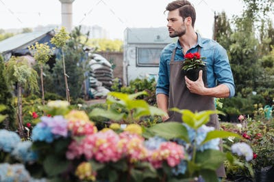 portrait of pensive gardener holding flower in flowerpot while standing in garden and looking away