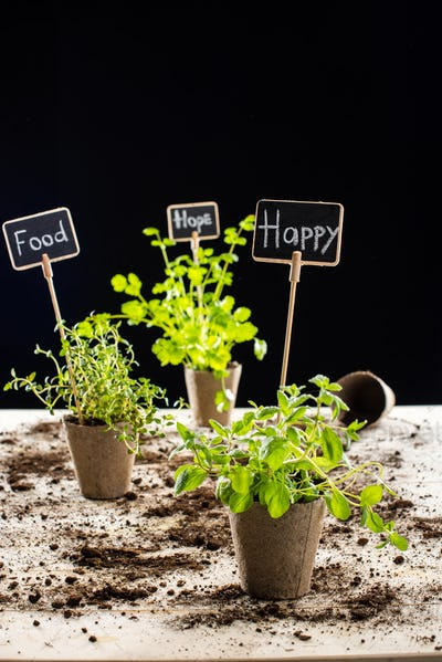 Close-up view of fresh green plants with happy, food and hope signs isolated on black, garden scene