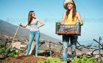Young women harvesting organic fruits in community greenhouse garden - Happy people at work