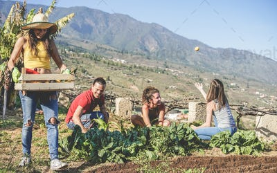 Friendly team harvesting fresh vegetables from the community greenhouse garden