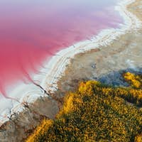 Coast with pink water. Aerial view of majestic landscapes of Jarilgach island in Ukraine