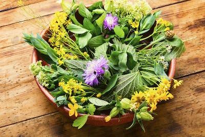 Natural medicine,fresh plants,healing herbs
