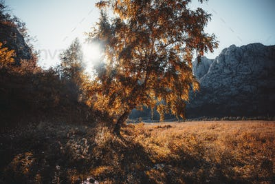 Fall mountain landscape with a birch