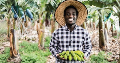 African farmer man working at greenhouse while holding a banana bunch - Focus on face