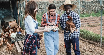 Multiracial farmers collecting organic eggs from henhouse - Focus on center woman face