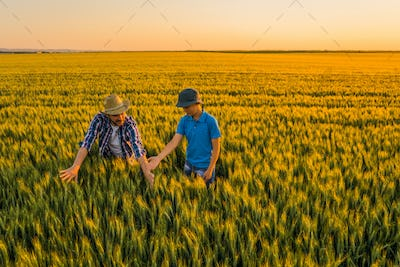 Family cultivating wheat