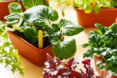 Home grown organic herbs