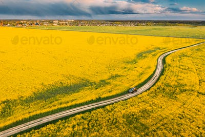 Aerial View Of Car SUV Parked Near Countryside Road In Spring Field Rural Landscape. Flowering