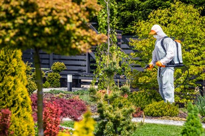 Gardener Worker Insecticide and Fungicide Garden Plants