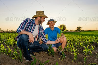 Family cultivating corn