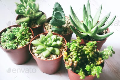 Beautiful and green succulent plants