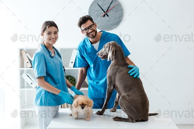 two young, cheerful veterinarians smiling at camera while standing near table with pekinese and