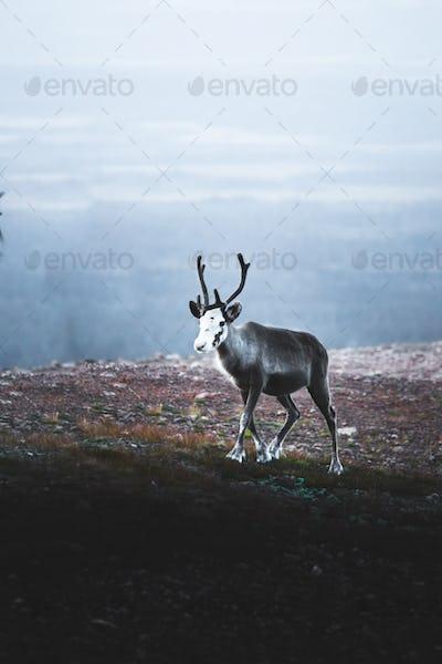 Lapland-76