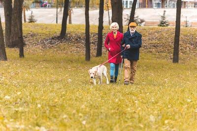 senior couple walking with labrador retriever dog in autumn park