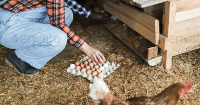 Farmer woman picking up organic eggs in henhouse - Focus on egg carton