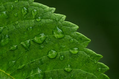 Close-up view raindrops on the green leaf