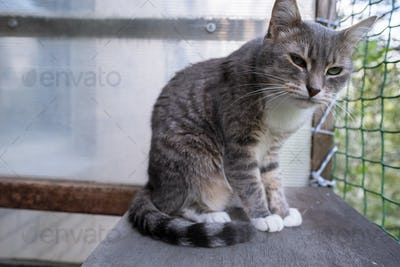 Cute cat is sitting on the balcony and looking suspiciously at the camera