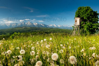 Picturesque Summer Landscape in Lesser Poland and Podhale Mountains Region of Poland