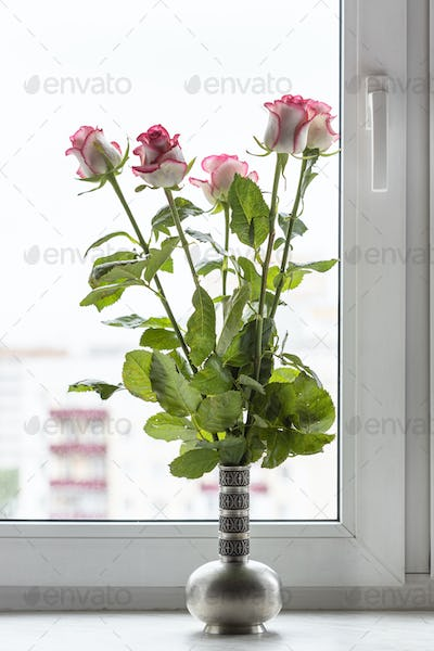 white pink roses in pewter jug on window sill