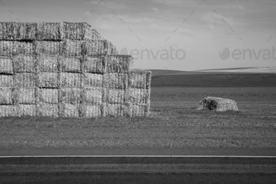 Large stack of hay bales, black and white