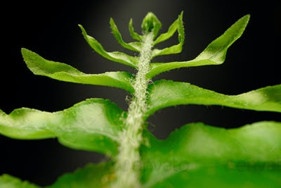 Close up of fern branch on black background