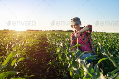 Middle age female caucasian maize farmer with tape measure kneeled for inspection corn stalks