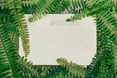 Fern natural background with empty paper card and free copy space