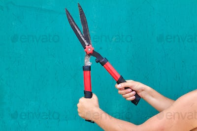 Hands holding garden shears isolated on turquoise backgroud.