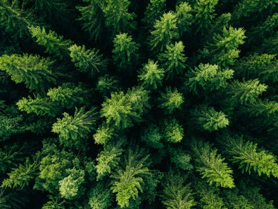 Aerial view of green summer forest with spruce and pine trees.