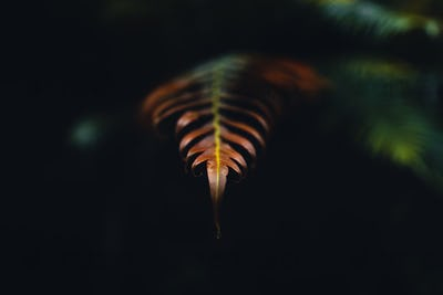 Dark fern leaves in the tropical rainy season