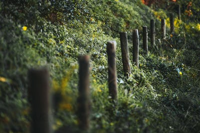 Wooden poles surrounded by grass